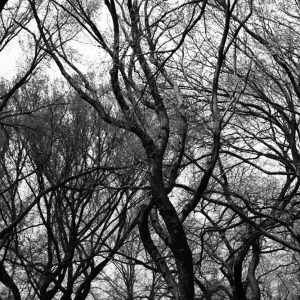 black and white forests